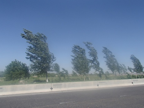 Trees suffering in the wind on the road to Navoi, Uzbekistan.